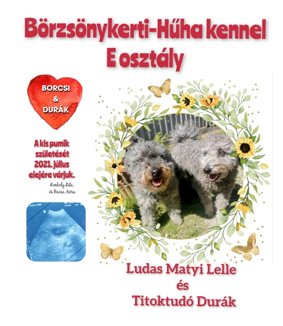 Pumi fedeztetés eladó pumi kiskutyák